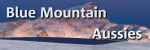 Blue Mountain Aussies