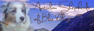 Blue Valley Aussies