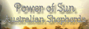 Power of Sun Australian Shepherds